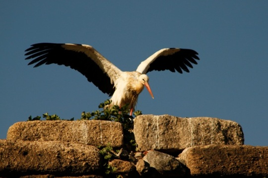 In Mérida we explored Roman ruins crowned with nesting storks.