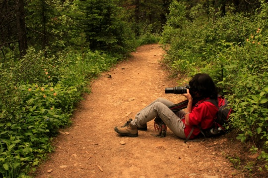 Photographing wildflowers is a lovely way to rest on a hot, steep trail.
