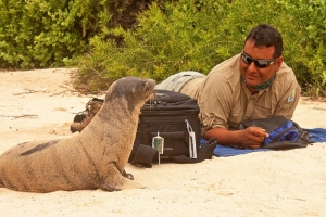 A Curious Sea Lion Investigates Our Guide
