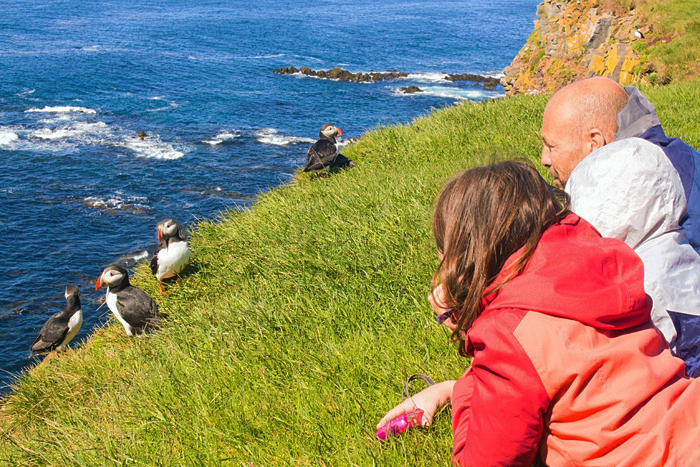 People Observing puffins Latrabjarg Cliffs, Westfjords, Iceland